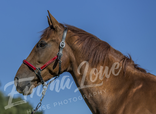 https://emmalowehorsephotography.co.uk/wp-content/uploads/2018/09/Hannah-and-Flame-Horse-Photography-Portrait.jpg