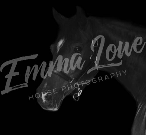 https://emmalowehorsephotography.co.uk/wp-content/uploads/2018/09/Niki004.jpg