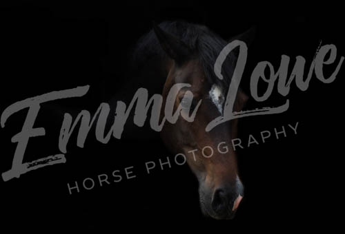 https://emmalowehorsephotography.co.uk/wp-content/uploads/2018/09/Niki005.jpg