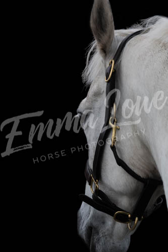 https://emmalowehorsephotography.co.uk/wp-content/uploads/2018/09/Niki006.jpg