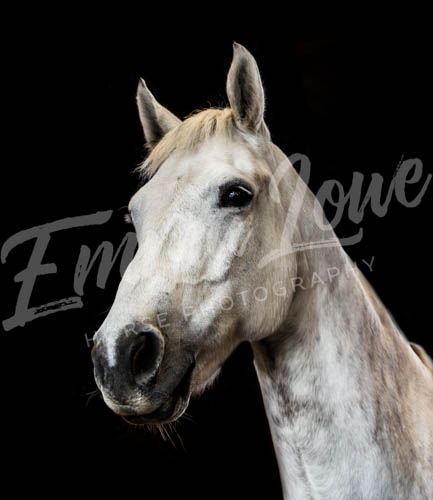 https://emmalowehorsephotography.co.uk/wp-content/uploads/2018/09/Niki007.jpg