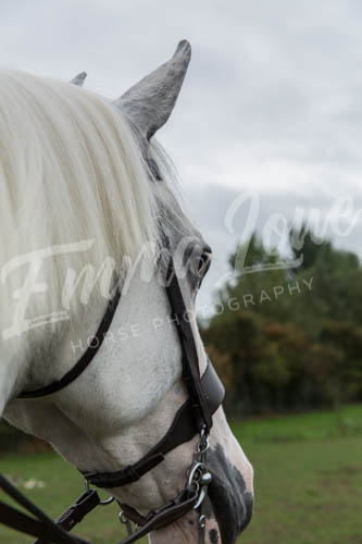 https://emmalowehorsephotography.co.uk/wp-content/uploads/2018/10/Alice007.jpg