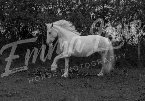 https://emmalowehorsephotography.co.uk/wp-content/uploads/2018/10/Alice013.jpg