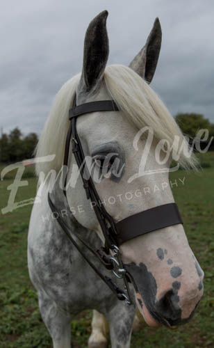 https://emmalowehorsephotography.co.uk/wp-content/uploads/2018/10/Alice017.jpg