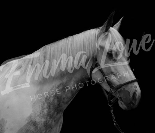 https://emmalowehorsephotography.co.uk/wp-content/uploads/2018/10/Alice019.jpg