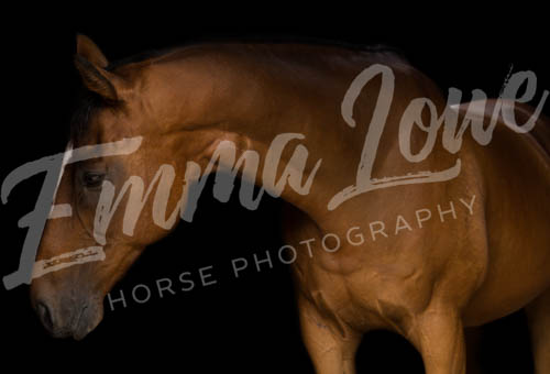 https://emmalowehorsephotography.co.uk/wp-content/uploads/2018/10/ED017.jpg