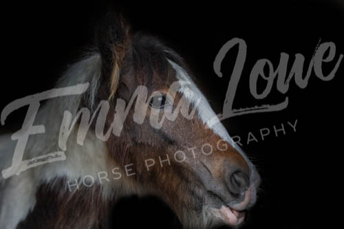 https://emmalowehorsephotography.co.uk/wp-content/uploads/2018/10/EV031.jpg