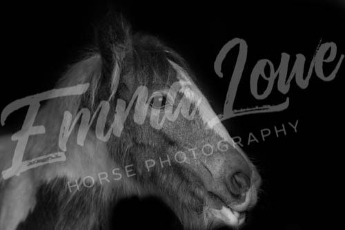 https://emmalowehorsephotography.co.uk/wp-content/uploads/2018/10/EV032.jpg