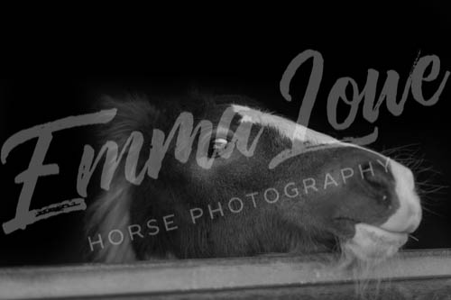 https://emmalowehorsephotography.co.uk/wp-content/uploads/2018/10/EV034.jpg