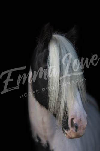 https://emmalowehorsephotography.co.uk/wp-content/uploads/2018/10/EV047.jpg