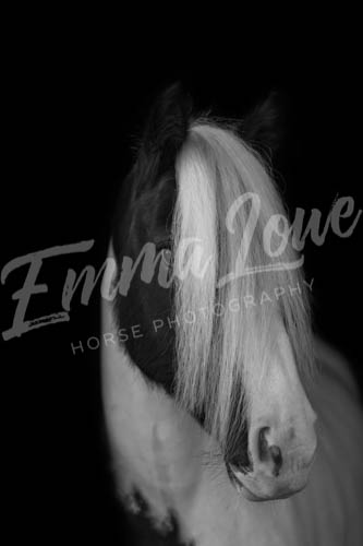 https://emmalowehorsephotography.co.uk/wp-content/uploads/2018/10/EV048.jpg