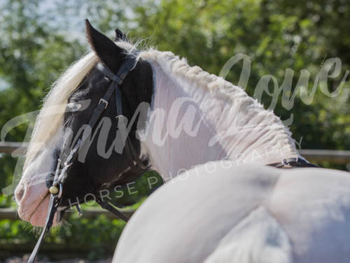 https://emmalowehorsephotography.co.uk/wp-content/uploads/2018/10/EV056.jpg