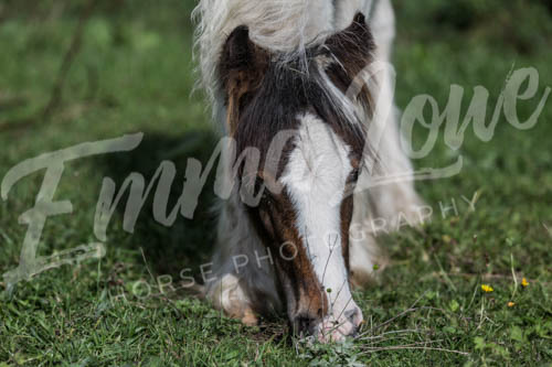 https://emmalowehorsephotography.co.uk/wp-content/uploads/2018/10/EV059.jpg