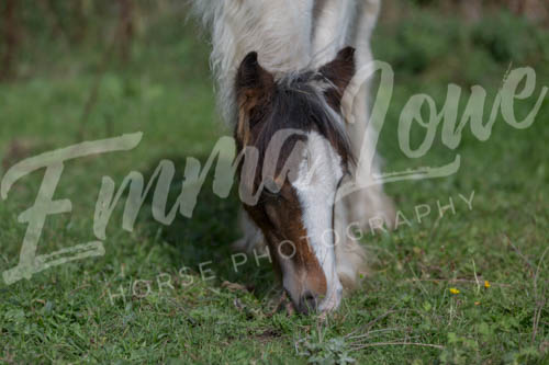 https://emmalowehorsephotography.co.uk/wp-content/uploads/2018/10/EV060.jpg