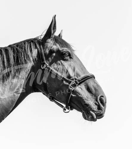https://emmalowehorsephotography.co.uk/wp-content/uploads/2018/10/HPFlame002.jpg