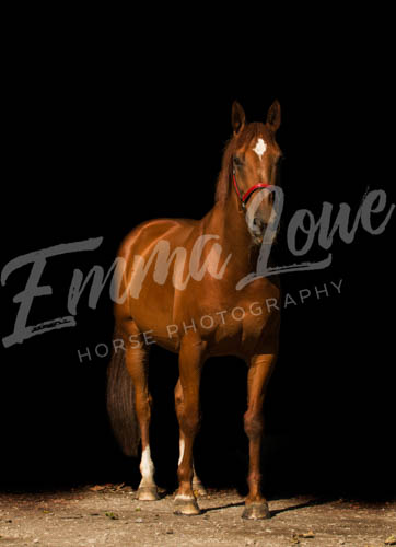 https://emmalowehorsephotography.co.uk/wp-content/uploads/2018/10/HPFlame005.jpg