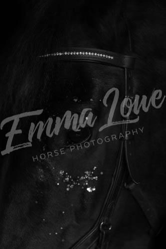 https://emmalowehorsephotography.co.uk/wp-content/uploads/2018/10/LJ003BW.jpg
