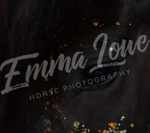 https://emmalowehorsephotography.co.uk/wp-content/uploads/2018/10/LJ004.jpg