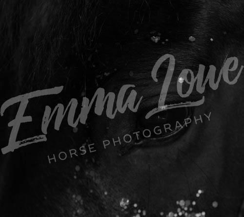 https://emmalowehorsephotography.co.uk/wp-content/uploads/2018/10/LJ004BW.jpg
