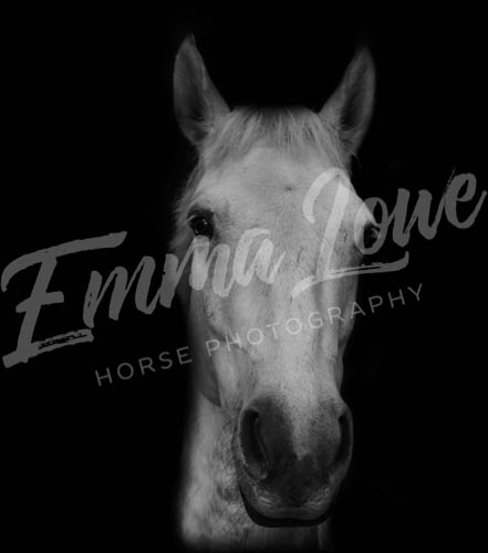 https://emmalowehorsephotography.co.uk/wp-content/uploads/2018/10/Niki010.jpg