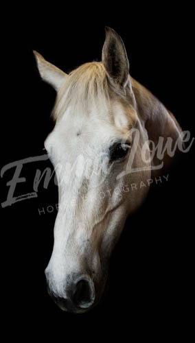 https://emmalowehorsephotography.co.uk/wp-content/uploads/2018/10/Niki011.jpg