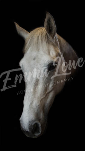 https://emmalowehorsephotography.co.uk/wp-content/uploads/2018/10/Niki012.jpg