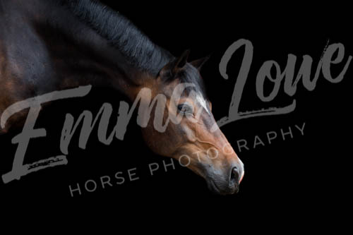 https://emmalowehorsephotography.co.uk/wp-content/uploads/2018/10/Niki015.jpg