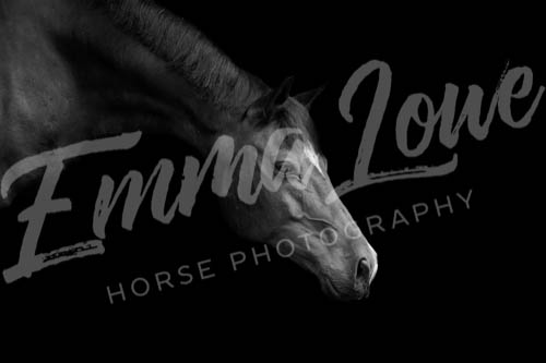 https://emmalowehorsephotography.co.uk/wp-content/uploads/2018/10/Niki016.jpg