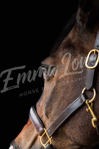 https://emmalowehorsephotography.co.uk/wp-content/uploads/2018/10/Niki017.jpg