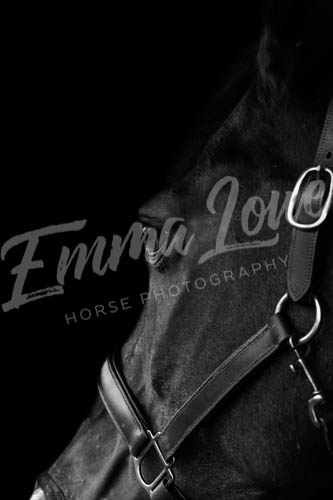 https://emmalowehorsephotography.co.uk/wp-content/uploads/2018/10/Niki018.jpg