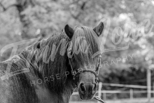 https://emmalowehorsephotography.co.uk/wp-content/uploads/2018/10/Sharon008.jpg