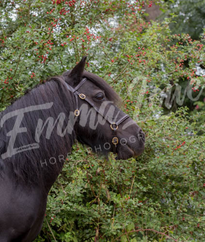 https://emmalowehorsephotography.co.uk/wp-content/uploads/2018/10/Sharon009.jpg