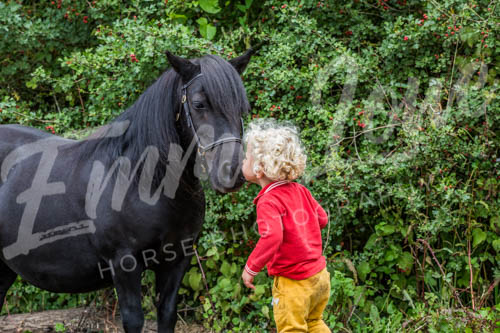 https://emmalowehorsephotography.co.uk/wp-content/uploads/2018/10/Sharon010.jpg