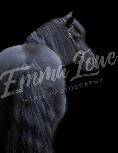 https://emmalowehorsephotography.co.uk/wp-content/uploads/2018/10/Sharon015.jpg