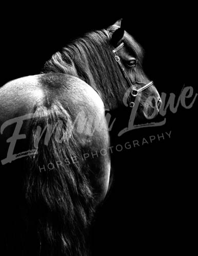 https://emmalowehorsephotography.co.uk/wp-content/uploads/2018/10/Sharon016.jpg