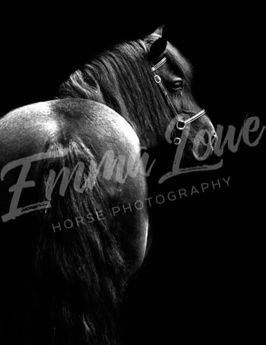 https://emmalowehorsephotography.co.uk/wp-content/uploads/2018/10/Sharon017.jpg