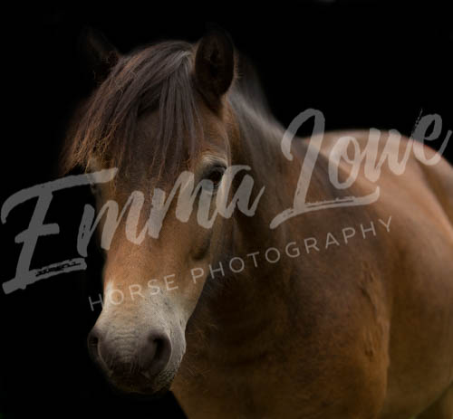 https://emmalowehorsephotography.co.uk/wp-content/uploads/2018/10/Sharon018.jpg