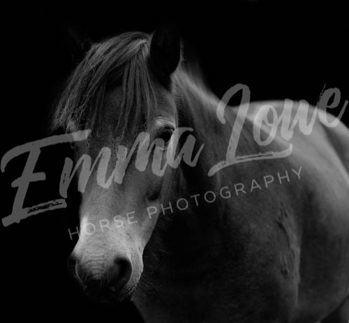https://emmalowehorsephotography.co.uk/wp-content/uploads/2018/10/Sharon019.jpg