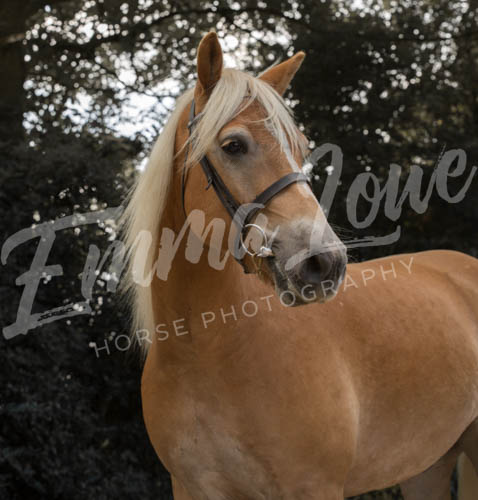 https://emmalowehorsephotography.co.uk/wp-content/uploads/2018/11/Herbie014.jpg