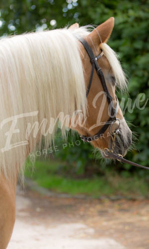 https://emmalowehorsephotography.co.uk/wp-content/uploads/2018/11/Herbie015.jpg
