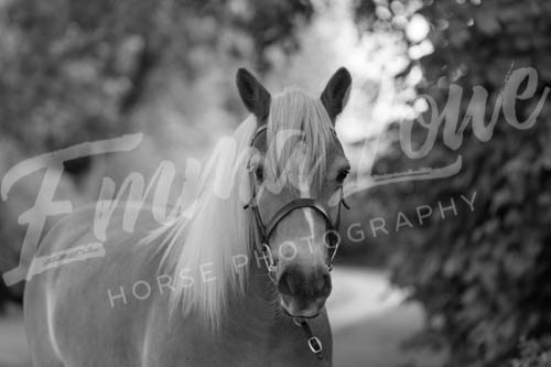 https://emmalowehorsephotography.co.uk/wp-content/uploads/2018/11/Herbie018.jpg