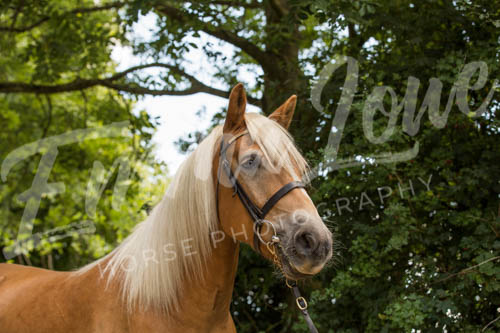 https://emmalowehorsephotography.co.uk/wp-content/uploads/2018/11/Herbie021.jpg
