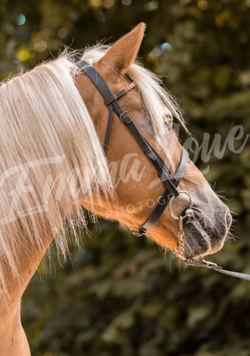 https://emmalowehorsephotography.co.uk/wp-content/uploads/2018/11/Herbie024.jpg