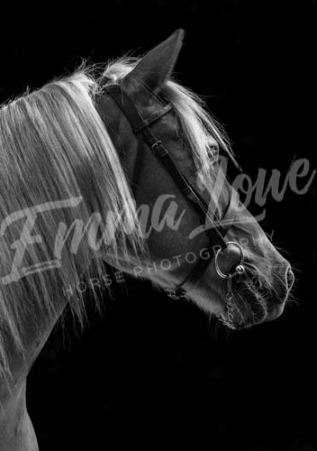 https://emmalowehorsephotography.co.uk/wp-content/uploads/2018/11/Herbie025.jpg