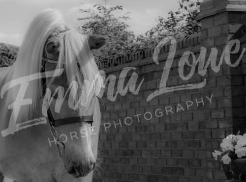 https://emmalowehorsephotography.co.uk/wp-content/uploads/2018/11/Herbie027.jpg