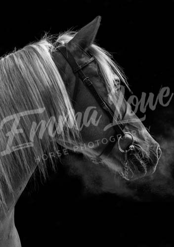 https://emmalowehorsephotography.co.uk/wp-content/uploads/2018/11/Herbie028.jpg