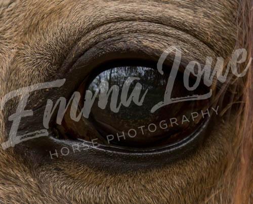 https://emmalowehorsephotography.co.uk/wp-content/uploads/2018/11/NO005.jpg