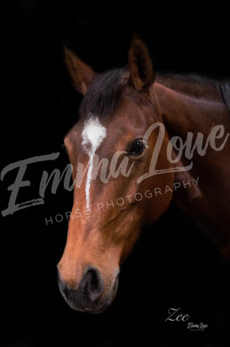 https://emmalowehorsephotography.co.uk/wp-content/uploads/2018/12/JM002.jpg