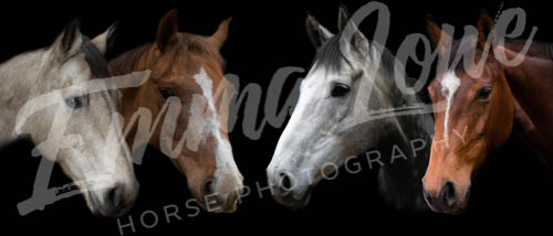 https://emmalowehorsephotography.co.uk/wp-content/uploads/2018/12/JM005.jpg