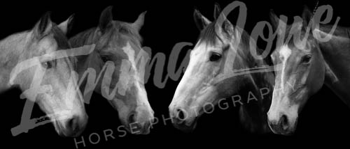 https://emmalowehorsephotography.co.uk/wp-content/uploads/2018/12/JM006.jpg